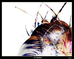 Fly Shrine by markoflegion