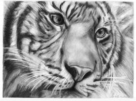 Tiger. by traine-sabatte