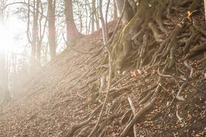 enchanting.roots by creativeIntoxication