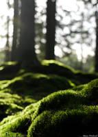 Moss by mwindmark