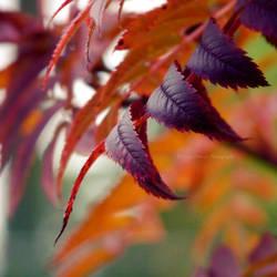 Purple Autumn by FreyaPhotos