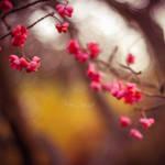 Winter Blossom by FreyaPhotos
