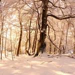 Winter's Light by FreyaPhotos