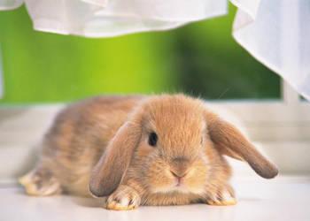 rabbit by OfficialGirl