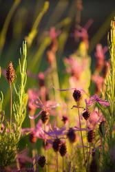 Purple flowers by DawnAllynnStock