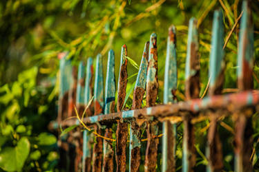 Rusted Fence and Ivy by DawnAllynnStock