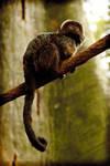 Zoo monkey by AddamRaeWolff