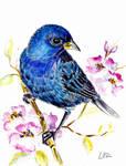 Bluebird by happytimer
