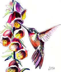 Hummingbird by happytimer