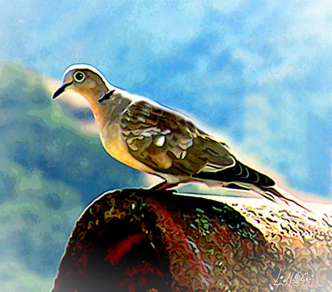 Cooing Pigeon by happytimer