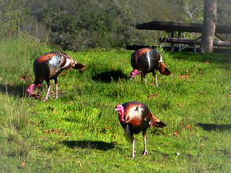 Turkey Time by happytimer