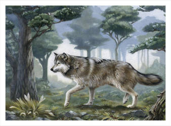 Wolf by VeraZowa