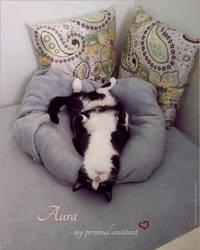 Aura - my assistant by VeraZowa