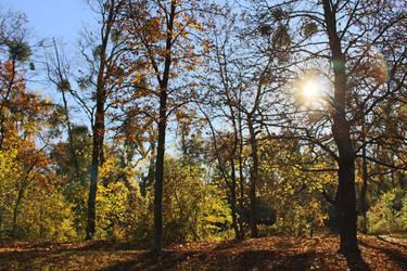 Autumn 2015 (Prater Vienna) by trifelife