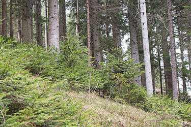 find the deer :-) by trifelife