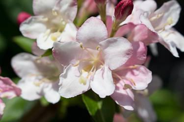 Flower by trifelife