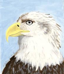 Bald Eagle Portrait by MsMergus