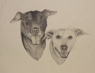 Doges by MsMergus