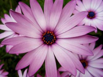 Flower Daisy by cryingpain