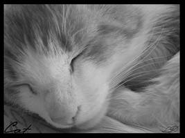cat by Splash-of-darknesS