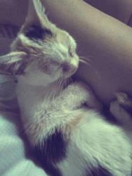 New kitten! by Petra-K-Z