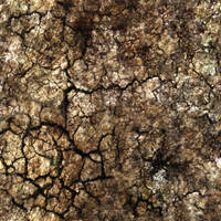 Ground_Texture_0001 by JamesPodesta91