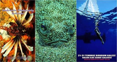 Underwater Photography by Arathrim