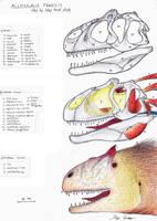 Allosaurus Head Anatomy by Dennonyx
