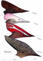 Thalassodromidae by Dennonyx