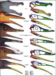 Piscivorous theropods / Skull comparison by Dennonyx