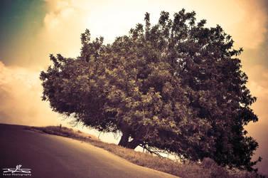 TREE JARASH by YASERGRAFIX