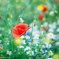 220620116 by Adila