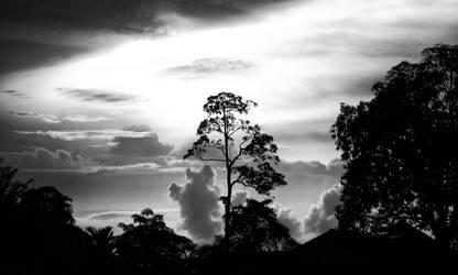 Skyforest by BennyBrand