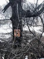 Img 20180127 131725 by Scrap-Rabbit-X