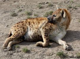 Relaxing hyena by AzureHowlShilach