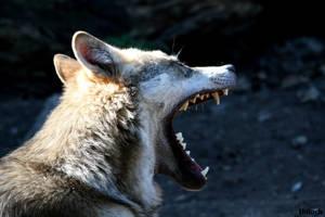 Big Yawn 141 by AzureHowlShilach