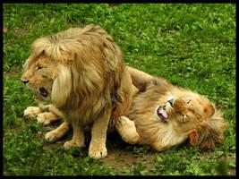 Playful lions by AzureHowlShilach