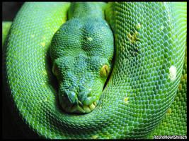 Green tree python by AzureHowlShilach