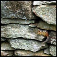 Stone Wall Chipmunk 3 by wiebkefesch