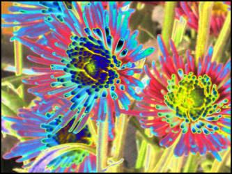 Rainbow Petals by wiebkefesch