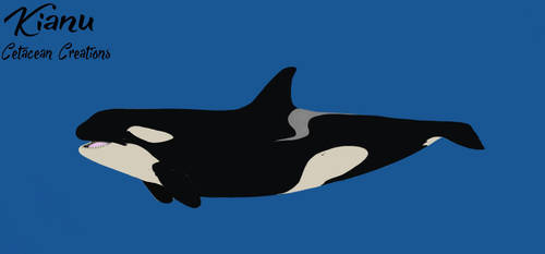 Kianu Bio by CetaceanCreations