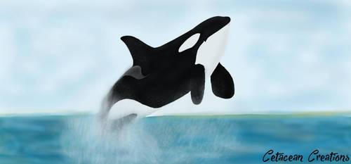 Breach by CetaceanCreations