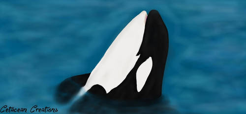 Spyhop by CetaceanCreations