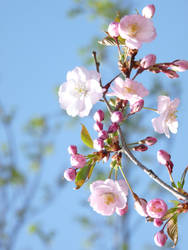 spring by kaddabo