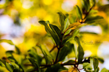 Plant of Fall by ceciliay