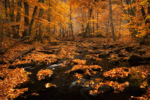Autumn colors by Wodger