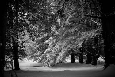 Trees of Snow by gperkins10