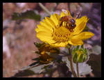 Or not to Bee by KeReN-R