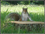 The Squirrel by Bamzu