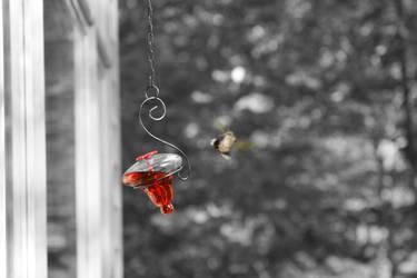 Hummingbird I by Bamzu